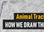 Sporen tekenen voor onze diersporen veldgidsen